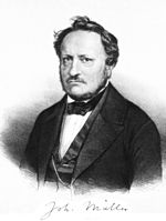 Johannes P. Muller Quotes